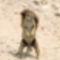 Kicsi mókus-2012