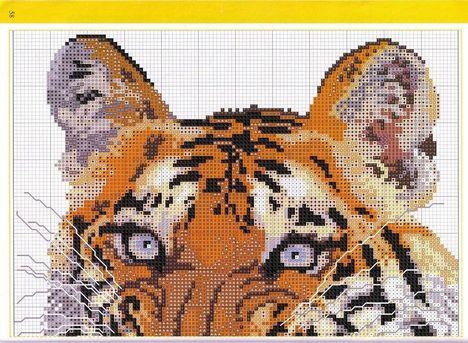 tigris xszemes minta  15