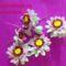 gyöngy virág csokor mintája lépésről- lépésre 17
