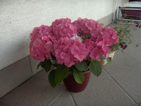Saját virág