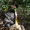erdőúásztor szemtétszedés