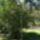 Arboretum_1528846_9932_t