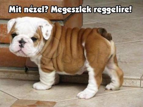 Kis kutyus ,fenyeget .