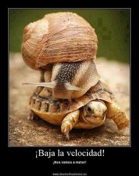 teki_csiga_vicces