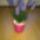 lefitimi virágai