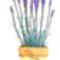 levendula,virág minta 1