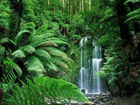 Amazónia 2