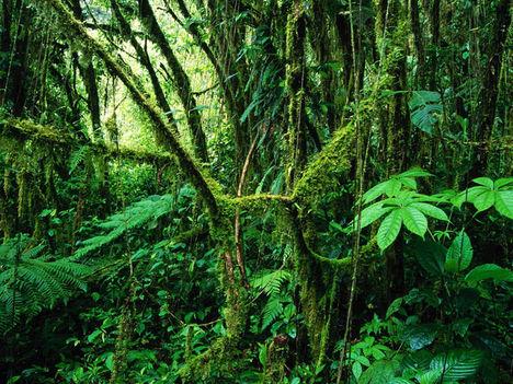 Amazónia 3