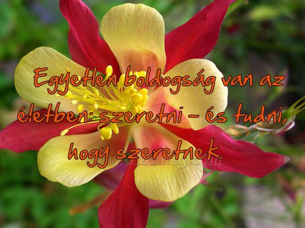 nagyon boldog idézetek Idézet: LEGYÉL NAGYON BOLDOG! (kép)