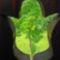 fa képe a faragott tulipán virágban...