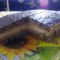 Gesztenyés-karamellás szelet