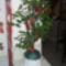 virágálvány