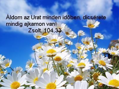 Zsoltár ...