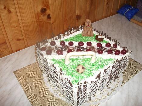tortaim 7