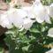 léggömb virág