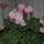 Ősszel virágzó szobanövények
