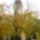 Oszi_foto_a_ferences_templomrol_1543264_4795_t