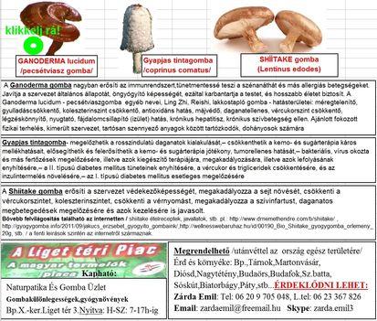 Egészségvédő Gombák