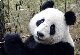 PandaStart-ingyenes pénzkereseti lehetőség