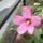 Saját virágaimból