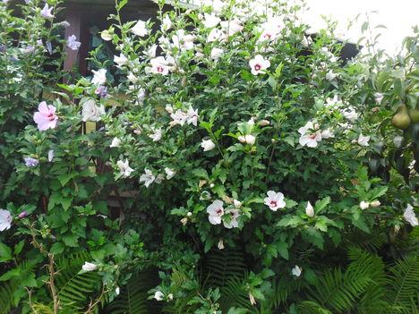 2012 kertemből 11