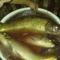 Áznak a halak