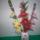 Erzsébet Harisnya virágai