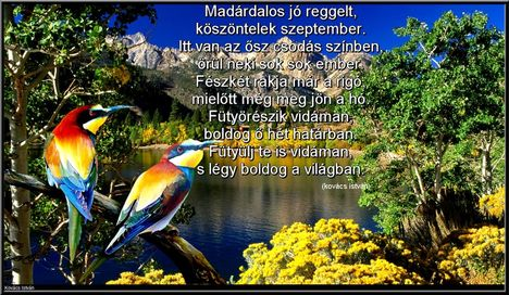 Színes madarak