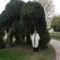 Kunszentmárton templomkert