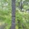Kunszentmártoni parkban