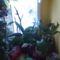 Orchideák 11