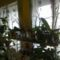 Orchideák 2