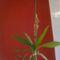 Orchideák 3