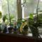 Orchideák 7