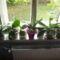 Orchideák 9