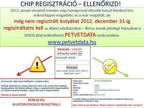 Ellenőrizd kutyachip regisztrációdat