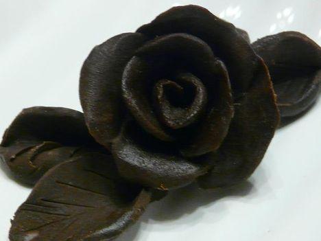 Csokirózsa