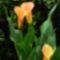 virág3