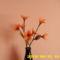 harisnya virágaim 108