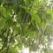 fák,virágok,állatok