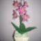 000_0030   Orchidea