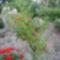 encián fám mas szögből