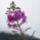 MÁTRA  -   virágok a természetben  - Rádiné Zsuzsa  fotói