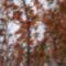 szines levelek a fákon