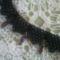 Fekete nyakék02