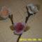 harisnya virágaim 177