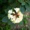 Jeli arborétumban készült fotók májusban 10