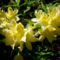 Jeli arborétumban készült fotók májusban 12