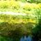 Jeli arborétumban készült fotók májusban 14