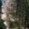 Jeli arborétumban készült fotók májusban 17